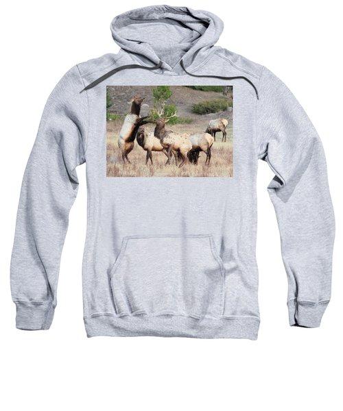 Put Up Your Dukes Sweatshirt