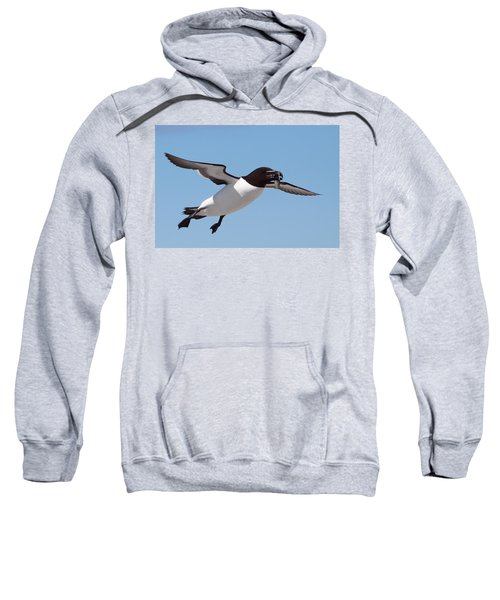 Razorbill In Flight Sweatshirt