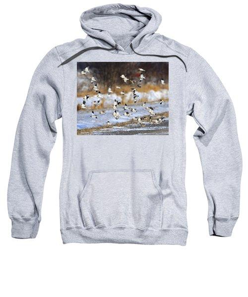 Snow Buntings Sweatshirt by Tony Beck