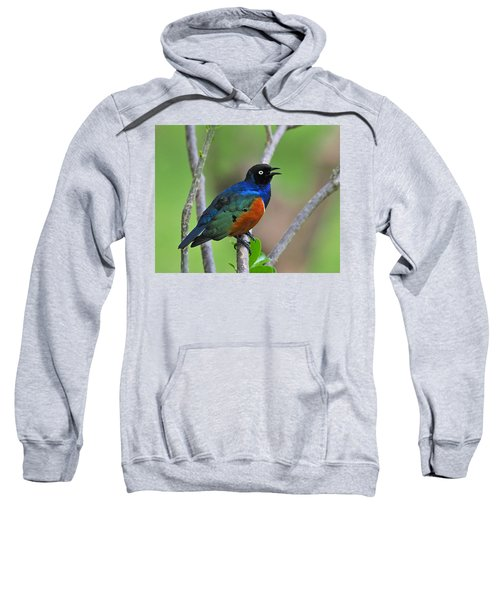 Superb Starling Sweatshirt by Tony Beck