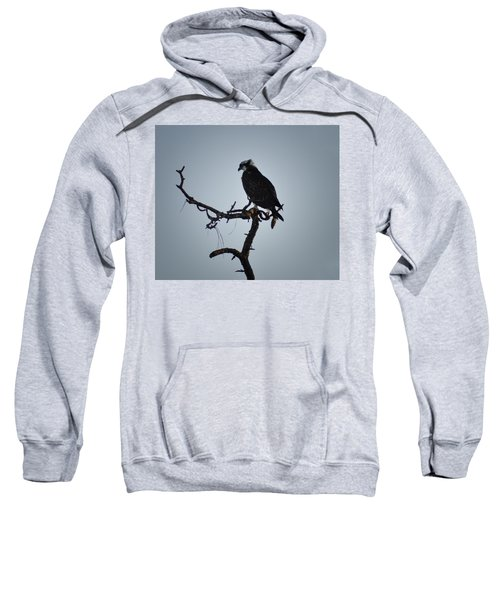 The Osprey Sweatshirt by Bill Cannon