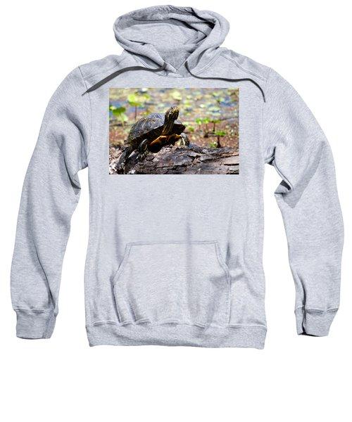 Turtle Sweatshirt