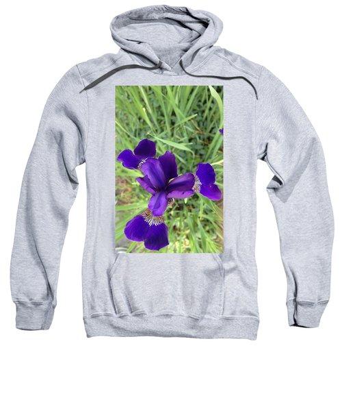 Velvet Royale Sweatshirt