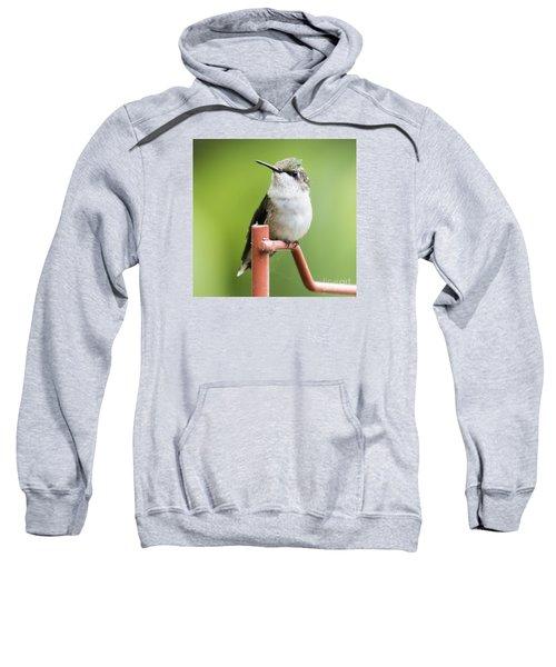 Sweatshirt featuring the photograph  Ruby-throated Hummingbird  by Ricky L Jones