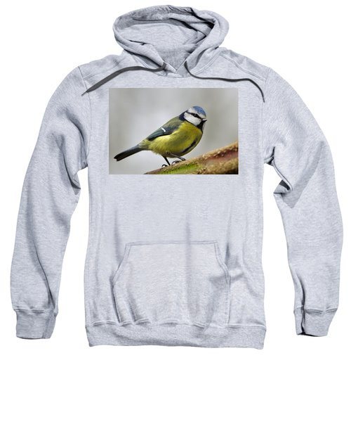 Blue Tit Sweatshirt