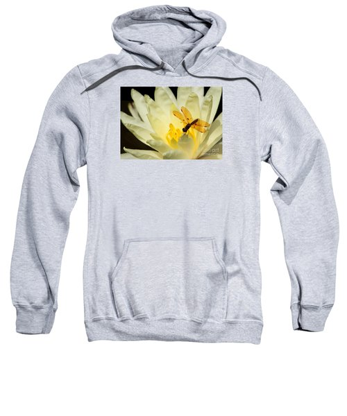 Amber Dragonfly Dancer 2 Sweatshirt