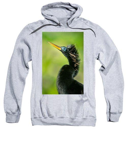 Anhinga Anhinga Anhinga, Tortuguero Sweatshirt by Panoramic Images