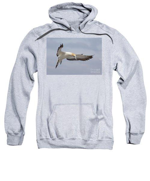 Australasian Gannet In Flight Sweatshirt