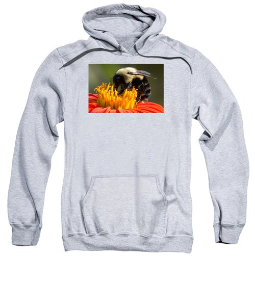 Bumble Bee Sweatshirt