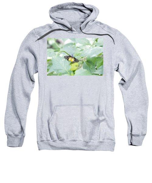 Tiger Butterfly Sweatshirt