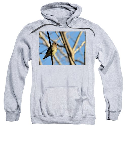 Cedar Wax Wing Sweatshirt