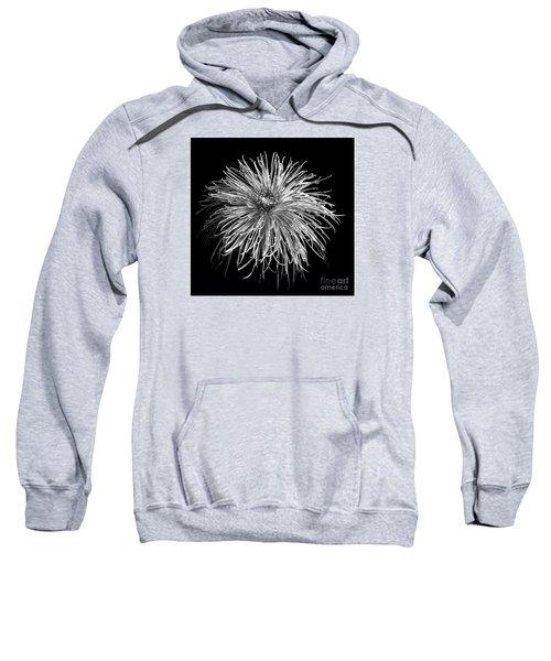 Chrysanthemum 'pink Splendor' Sweatshirt