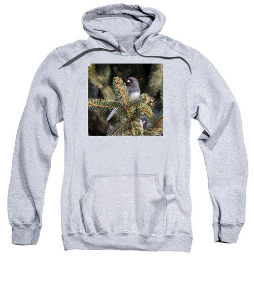 Dark-eyed Junco Sweatshirt