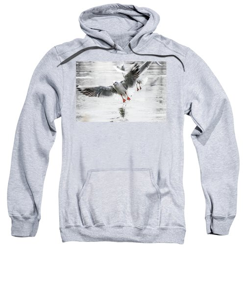 Flying Seagulls Sweatshirt