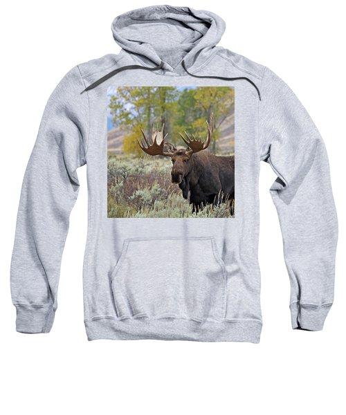 Handsome Bull Sweatshirt