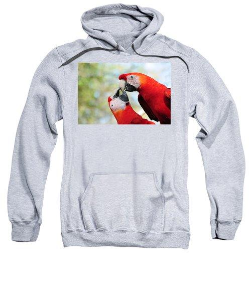 Macaws Sweatshirt