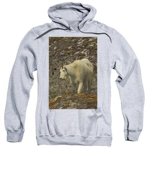 Mountain Goat Ewe Sweatshirt