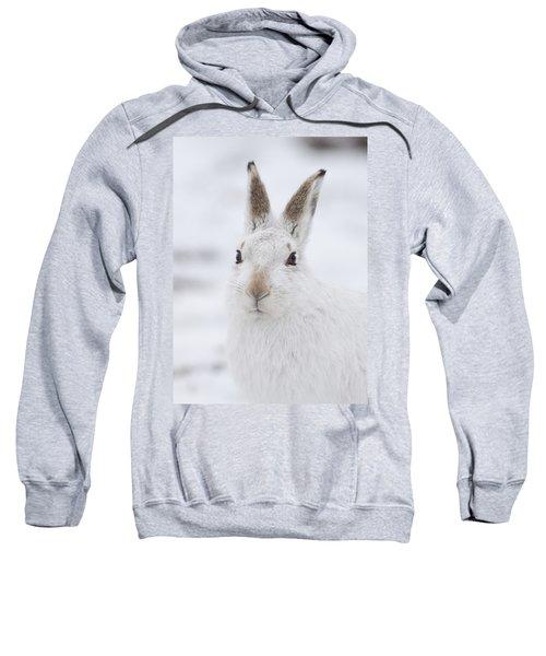 Mountain Hare In The Snow - Lepus Timidus  #1 Sweatshirt