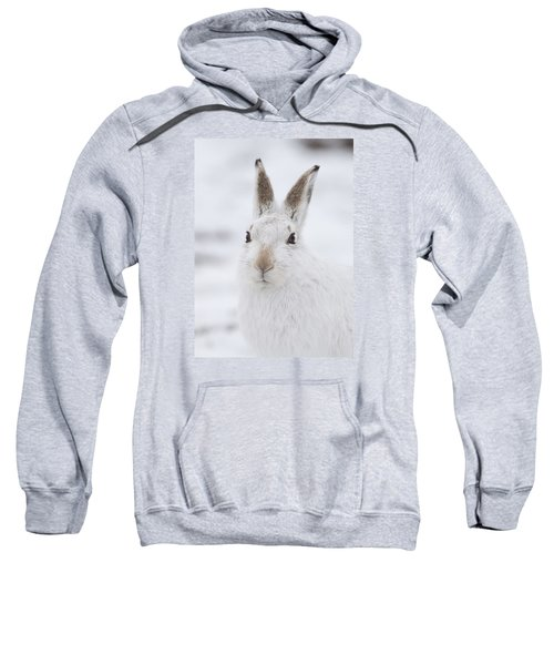 Mountain Hare In The Snow - Lepus Timidus  #1 Sweatshirt
