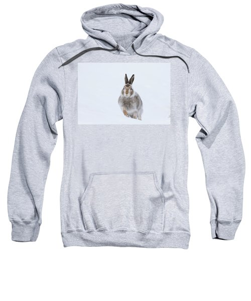 Mountain Hare - Scotland Sweatshirt