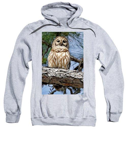Owl In A Tree Sweatshirt