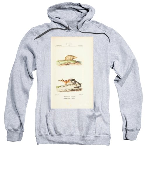 Planches  By Paul Gervais Sweatshirt