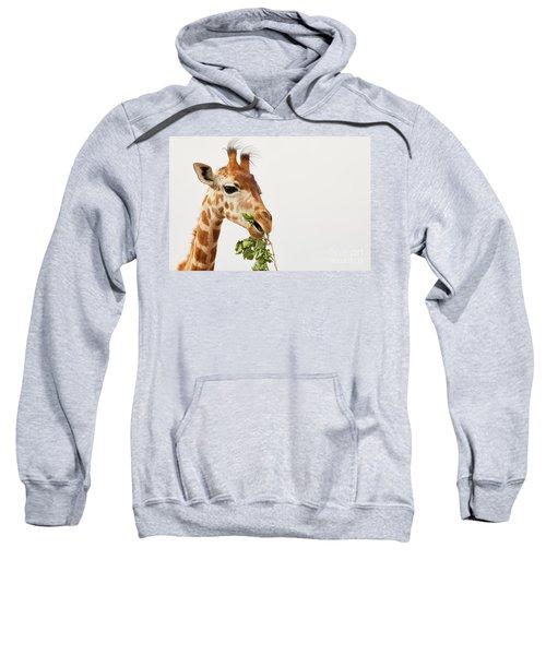 Portrait Of A Rothschild Giraffe  Sweatshirt
