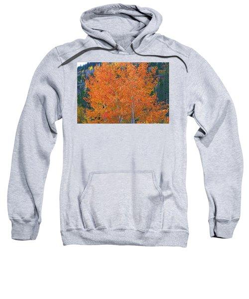 Translucent Aspen Orange Sweatshirt