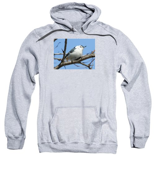 White-breasted Nuthatch Sweatshirt by Ricky L Jones