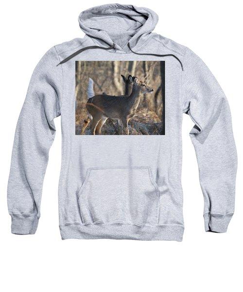 Wild Deer Sweatshirt