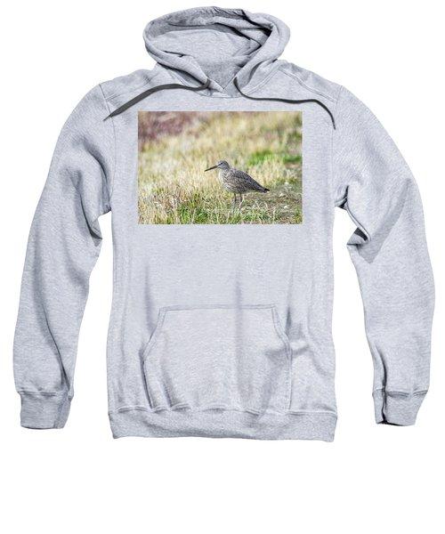 Willet Sweatshirt