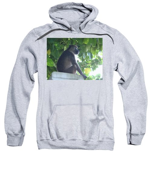 Baboon Sits Guard  Sweatshirt