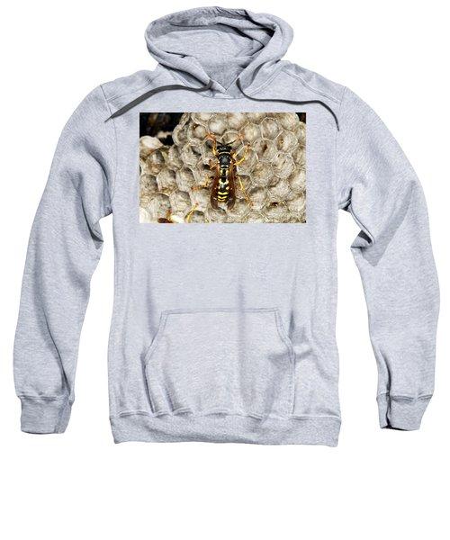 Common Wasp Vespula Vulgaris Sweatshirt