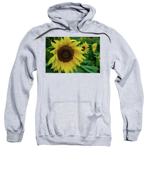 Sunflower Fields Sweatshirt