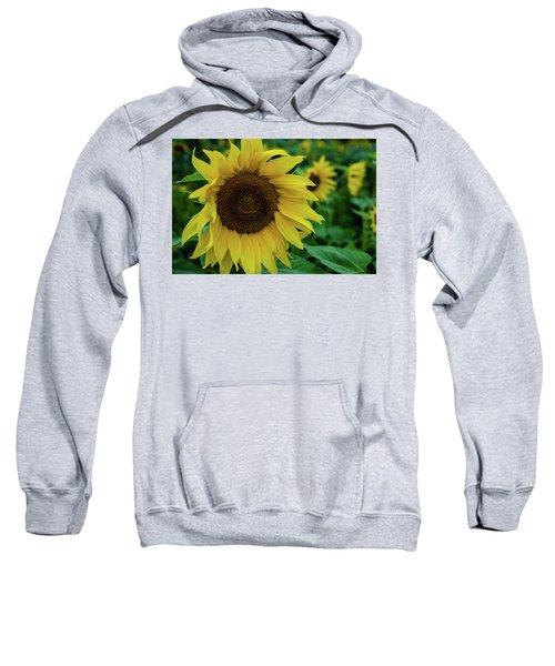Sunflower Fields Sweatshirt