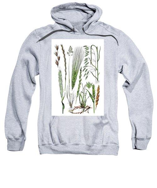 Various Medicinal Plants Sweatshirt