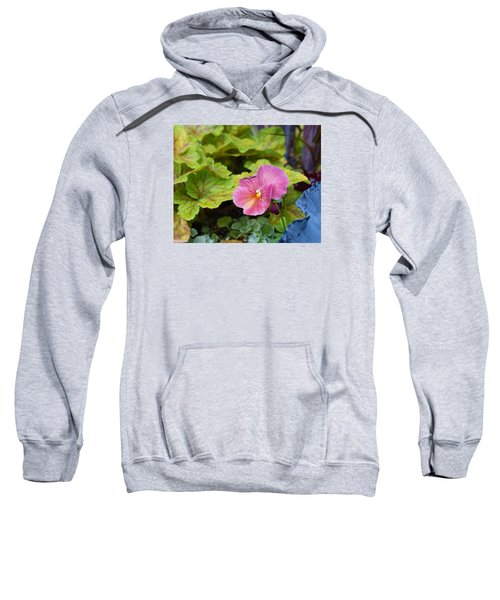2015 After The Frost At The Garden Pansies 3 Sweatshirt