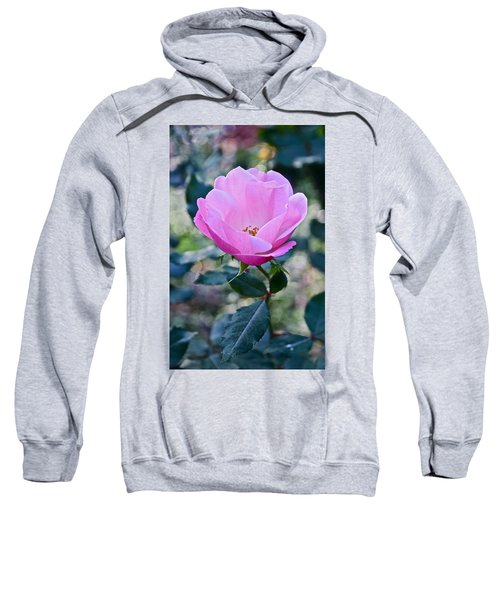 2015 After The Frost At The Garden Pink  Rose Sweatshirt