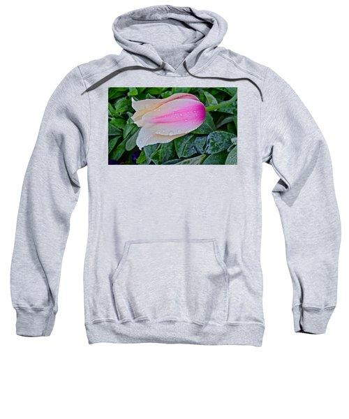 2015 Spring At Olbrich Gardens Lily Tulip In The Rain Sweatshirt