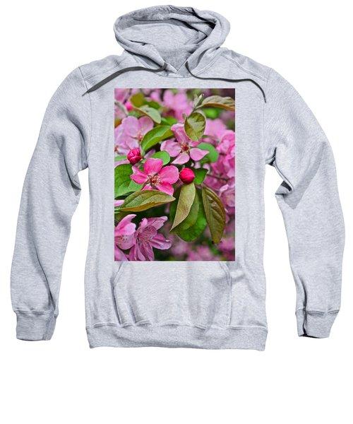 2015 Spring At The Gardens Pink Crabapple Blossoms 2 Sweatshirt