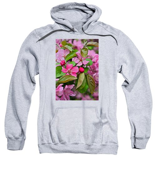 2015 Spring At The Gardens Pink Crabapple Blossoms 2 Sweatshirt