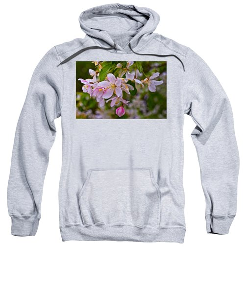 2015 Spring At The Gardens White Crabapple Blossoms 1 Sweatshirt