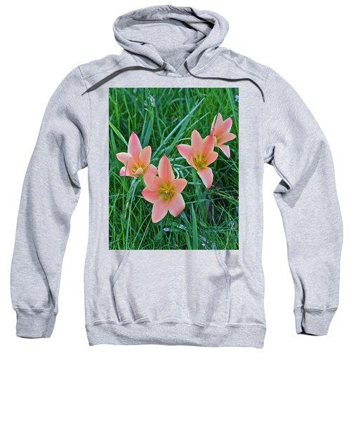 2015 Spring At The Gardens Meadow Garden Tulips 3 Sweatshirt