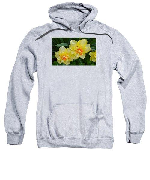 2015 Spring At The Gardens Tango Daffodil Sweatshirt