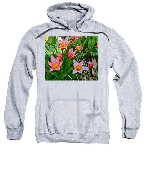 2016 Acewood Tulips 2 Sweatshirt