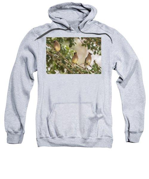 3 Cedar Waxwings  Sweatshirt