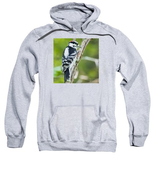 Sweatshirt featuring the photograph Downy Woodpecker  by Ricky L Jones