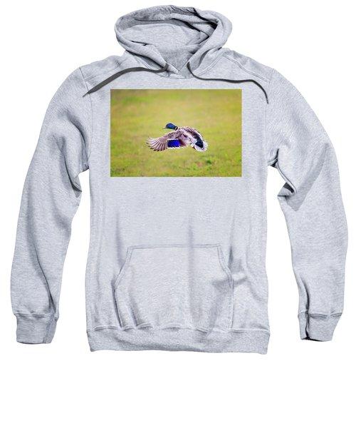 Duck-drake Sweatshirt