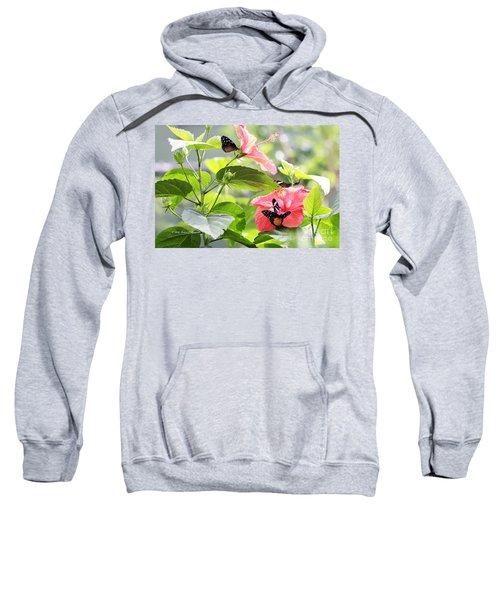 Cream-spotted Clearwing Butterfly Sweatshirt