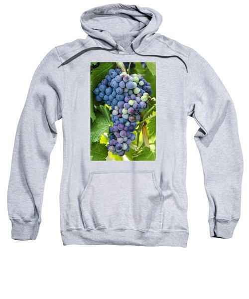 Red Wine Grapes Sweatshirt